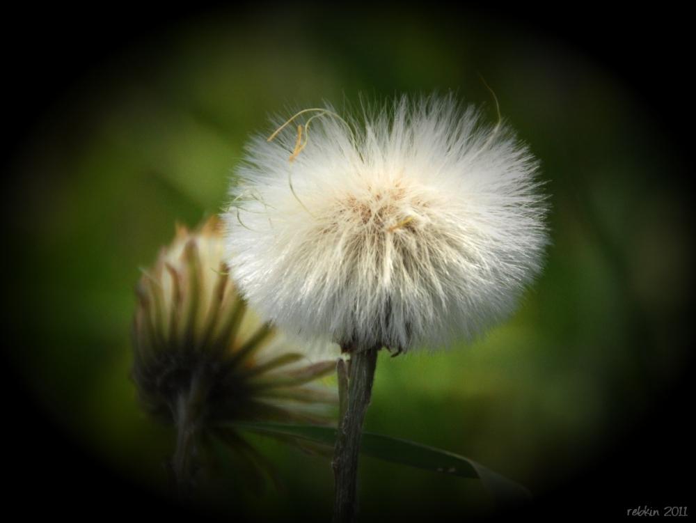 Weekly Photo Challenge: Flowers